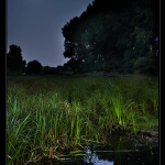 swampy_moon_desktop