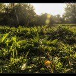 greenfields_Desktop