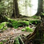 Magic_Forest-2-Wallpaper