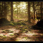 Magic_Forest_Desktop