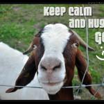 Keep-Calm-And-Hug-A-Goat-web