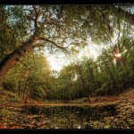The-Tree-of-Autumn-web