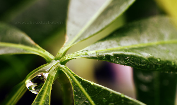 Drop1-web