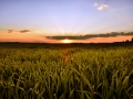 Sundown-Nickelsdorf-web