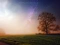Tree-in-stars-web