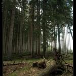 forest__desktop