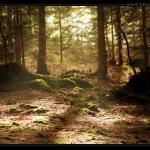 magic_forest_desktop