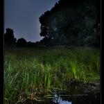 swampy_moon_desktop