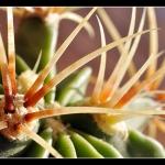 kaktus_makro_panorama_desktop